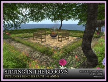 TMG - SITTING IN THE BLOOMS*