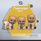 [Rezz Room] Box Pomeranian Animesh (Companion)