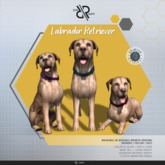 [Rezz Room] Box  Adult Labrador Retriever  Animesh (Companion)