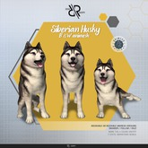 [Rezz Room] Pack Siberian Husky B/W  Adult Animesh  (companion)
