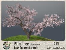 Konoha - Plum tree (Prunus lanie) Set-A  V.012 [Boxed]