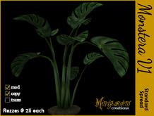 MG - Monstera Tropical Plant v1
