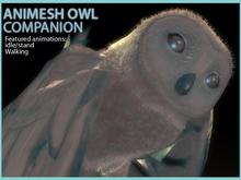 ! Drot * Fuzzy Owl - Animesh
