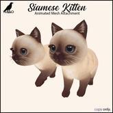 {Nano} Siamese Kitten {Box}