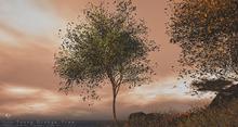 Young Ginkgo Tree Animated 4 Seasons