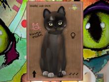 ♀ MEGAPUSS!! Coco III - HGB - KittyCats! New Born Kitten