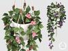 hive // hanging bougainvillea plant . set 1