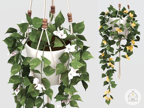 hive // hanging bougainvillea plant . set 2