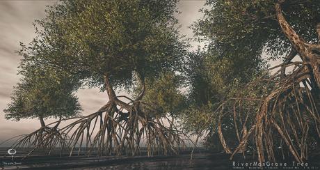 LB River Mangrove Tree Animated 4 Seasons