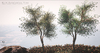 LB Wild Eucalyptus Tree Animated 4 Seasons