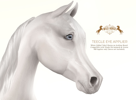 Wild Horse - Teegle Eyes - White [Akhal Teke]