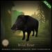 [C] Animesh Follower - Wild Boar (Wear)