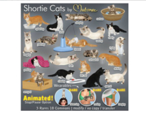 Mutresse-Teased-Shortie Cats