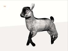 MB box baby goat white