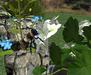 Garden%20bee%20101