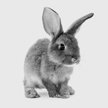 BB Bunny Box - Dipana Black - Blue Eyes - Normal Down
