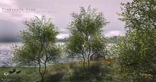LB Crabapple Tree Animated 4 Seasons