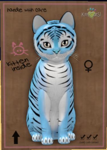 KittyCatS Box - New Born Kitten Tiger! Powder Blue Female