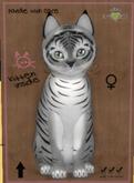 KittyCatS Box - New Born Kitten Tiger! - Shadow Female