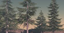 (Fundati) Conifer trees set