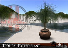 HeadHunter's Island - Tropical Potted beach lagoon tiki plant - Ponytail palm - with sculpt pacific clay pot