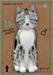 KittyCats Box - American Shorthair - Silver & White Tabby - 8T
