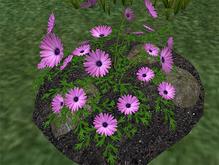 Lilac Daisies - Tall - FP