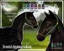 Spanish Arabian Halter - Pegasus
