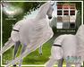 Tucked Tail - Pegasus