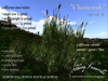 """) AI ( - """"Chamomile"""" (Native Irish Grasses Collection) (WAS $375 -> NOW ONLY $95!)"""