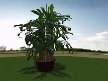 Floor Plant 1