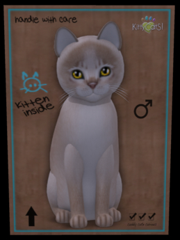KittyCatS Box - Fur: Abyssinian - Lilac Eyes: Genesis Sunflower (Shape: Curious | Pupil: Big) Shade: Natural Tail: Plush