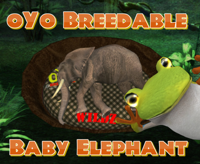 oYo Breedable Elephant Bundle: F Baby Purple Black Eyes Tamed