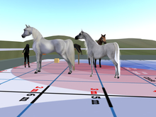 public and group and list horse rezzer style c v2 boxed