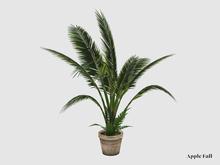 Apple Fall Huge Fan Palm