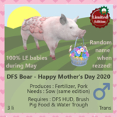 DFS Boar - Happy Mother's Day 2020