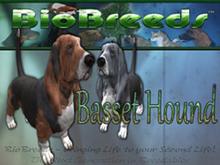 BioBreeds (BB) Dog FEMALE Basset Hound (BH) STARTER (Boxed)
