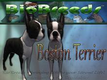 BioBreeds (BB) Dog FEMALE Boston Terrier (BT) STARTER (Boxed)