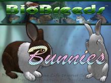 BioBreeds (BB) Bunny MALE Rabbit STARTER (Boxed)