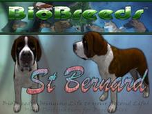 BioBreeds (BB) Dog FEMALE Saint Bernard (SB) STARTER (Boxed)
