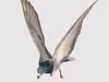 AP037 Animpet Animesh Flyin Bird