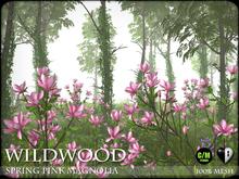 Wildwood - Spring Magnolia Trees