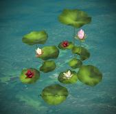 29_8f8 - Art of Nature - Lotus Bunch Box