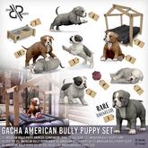 [Rezz Room] Box American Bully Puppy Animesh Companion RARE