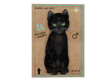 KittyCatS Box - 8 T - M - Bengal - Black