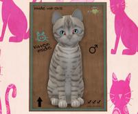 KittyCatS Box - M Toyger Snow Prismatic 3T