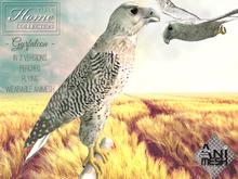 Falcon,Gyrfalcon