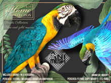 Macaw,Parrot,blue gold