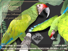 Macaw,Parrot,great green