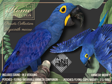 Macaw,Parrot,hyacinth